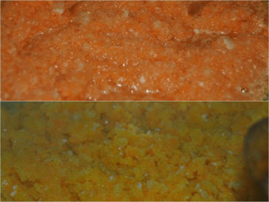 salsa cremosa de zanahoria