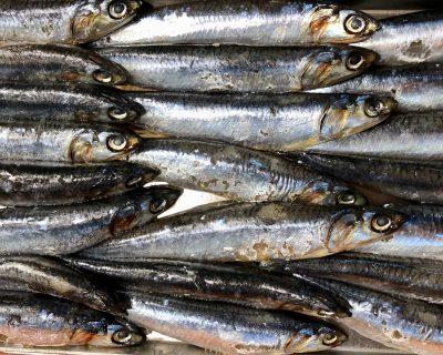 Propiedades y beneficios de las anchoas
